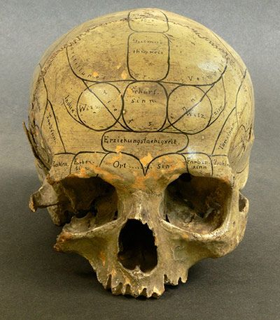 A human skull inscribed by a nineteenth-century practitioner of phrenology. According to this now discredited theory, bumps on the skull betray the volume of the brain areas beneath each one, and thus can be employed to divine a subject's cognitive or moral strengths and weaknesses