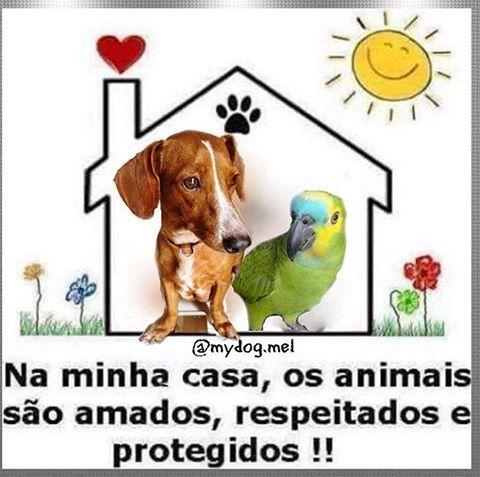 NA MINHA TAMBÉM! <3 #petmeupet #amoanimais #euprotejo #cachorro #gato: