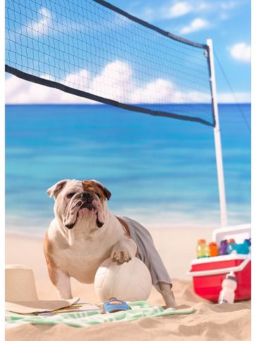 The life of a bulldog by John Sterling. Pet Photography | Dog | Fun photo session Ideas | Props | Portraits | Beach | Summer