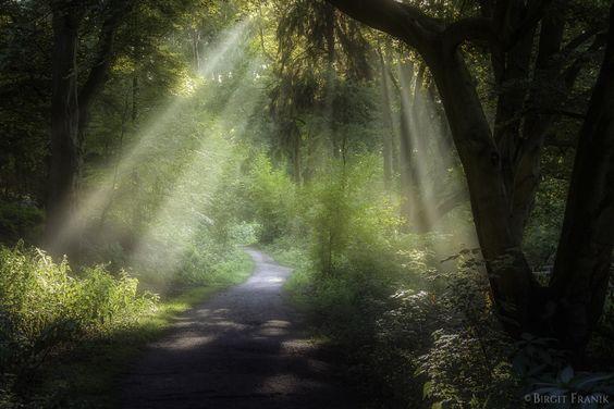 ***Path through curtains of light (Germany) by Birgit Franik - 500px