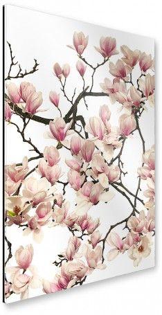 artboxONE Galerie-Print 60×40 cm Floral ´´Magnolie´´ rosa hochwertiges Acrylglas auf Alu-Dibond Bild – Wandbild Floral Kunstdruck von Tan Kadam