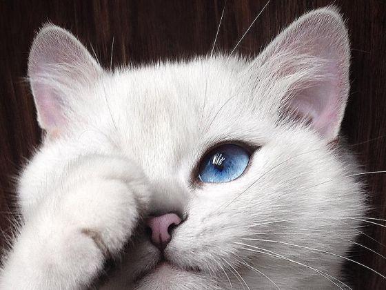 Coby lorsqu'il était chaton