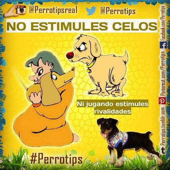 No generes conflictos ni peleas entre ellos por juegos de celos #perrotips