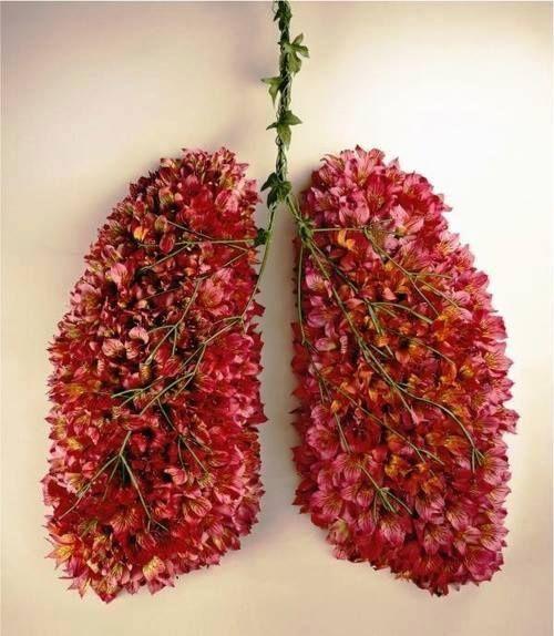 pulmones floresciendo1