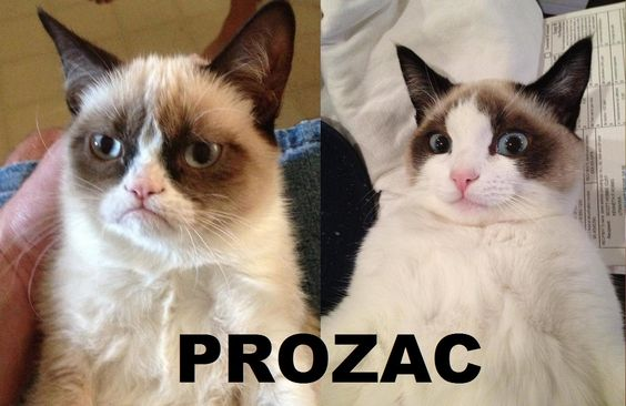 Grumpy Cat just say no to drugs!!!