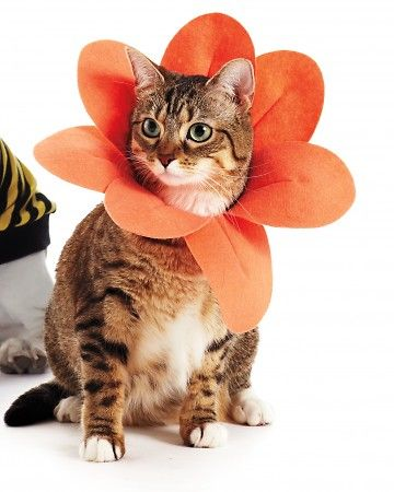 The cutest! Make a petal collar for your kitty.