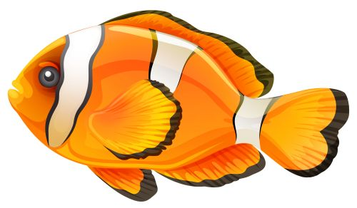 Clownfish Png Clipart High Quality Png Clipart Image In Cattegory Underwater Png Clipart From Clipartpng Com Clown Fish Art Images Fish Outline