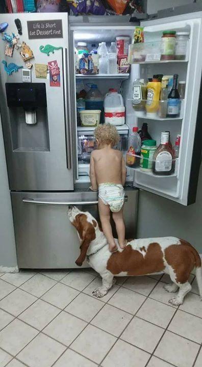 冷蔵庫を開ける犬と赤ちゃん