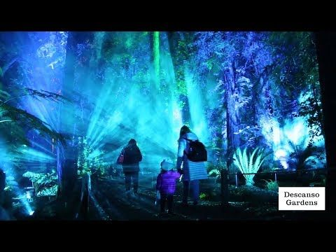 b27d78a486ce6e40ff0825c0f30f5ace - Enchanted Forest Of Lights At Descanso Gardens