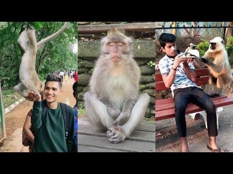 Monkey Funny Tiktok Video It Will Make You Laugh Youtube Monkeys Funny Laugh Cute Baby Animals
