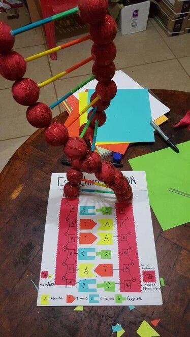 estructura del adn maquetas pinterest