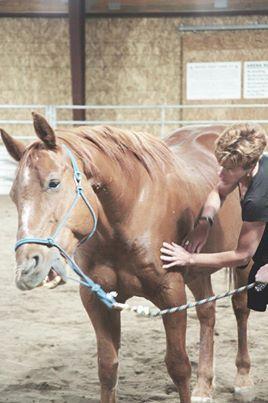 As massagens e carícias aos cavalos são momentos que apelam à nossa sensibilidade emocional e corporal. Através da relação com o cavalo promovem a consciencialização do nosso ritmo interno (respiração, batimentos cardíacos, tensões musculares).