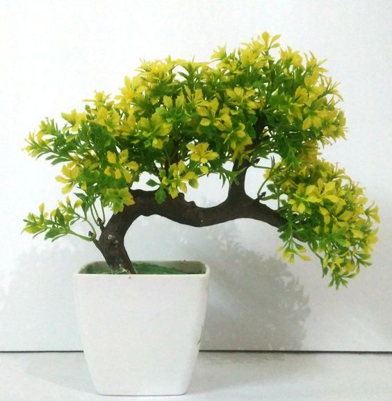 Bonsai-Tree-With-Greenish-leaves-in-ceramic-white-pot