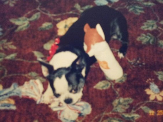 Vickie with her Xmas toys.