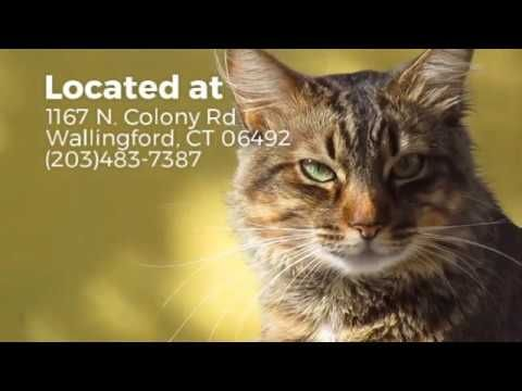All Pets Club Wallingford 3 Tips Before Bringing Home A Pet Cute Cat Gif Funny Animal Videos Best Cat Gifs