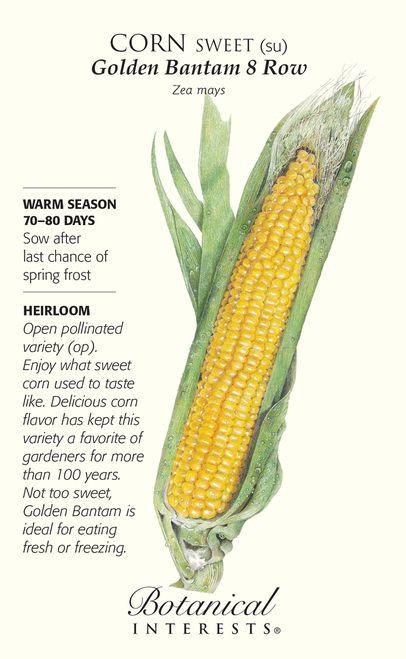 Organic Striped Japonica Ornamental Corn Seeds 5 grams