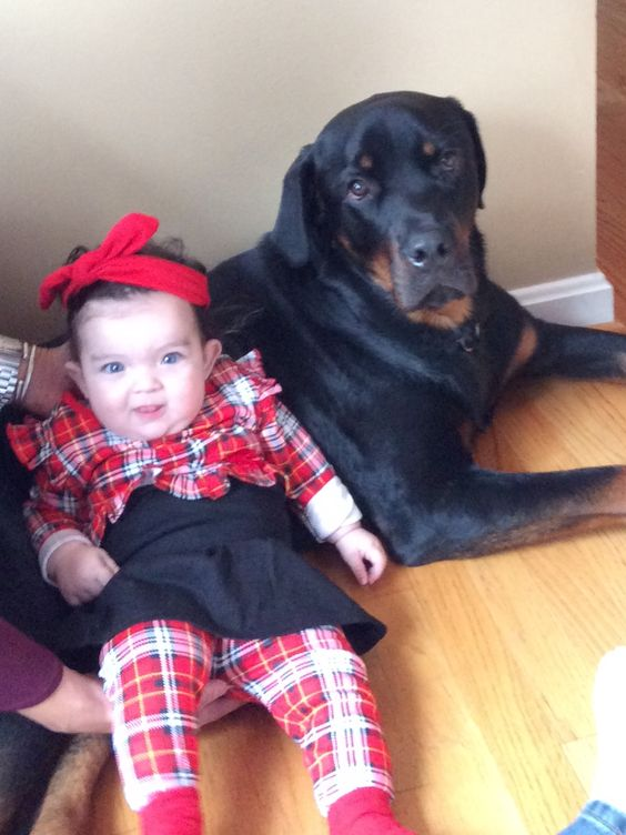 Rottweiler and his baby sister