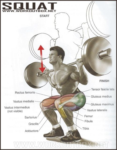 How to Squat: Back to Basics