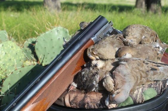 Wild dove recipes and dove hunting tips #dove #hunting #recipe