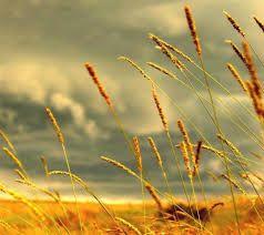 Resultado de imagem para Todo entardecer, jogo ao vento as canções de amor que fiz... Espero que ele as sopre em seu ouvido durante toda noite... E que assim, elas aqueçam seu coração, aonde você for..