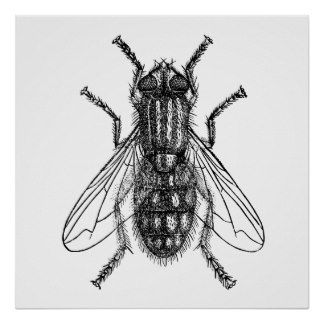 Imagem de http://rlv.zcache.co.uk/fly_insect_vintage_engraving_poster-r5f0d38f5fb8e42dd8b0a014addaf7988_w2q_8byvr_324.jpg.