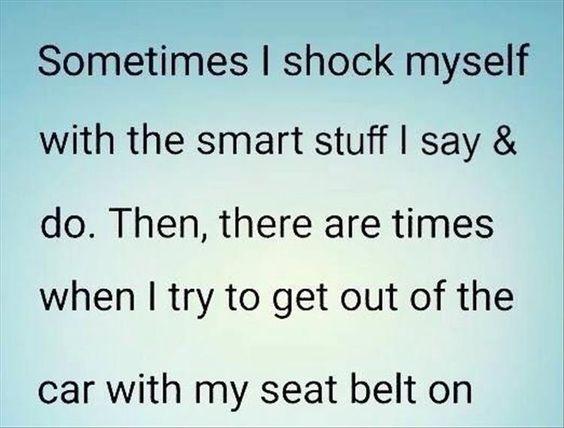 seat belt funny: