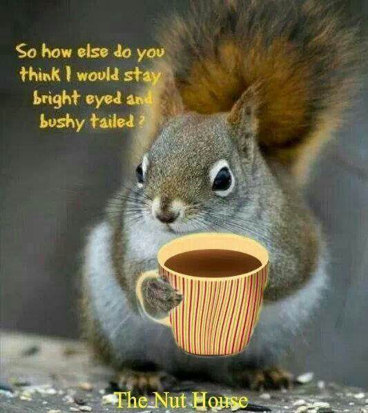 I Need Coffee With Images Squirrel Funny Funny Animal Memes