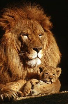 Papai e filhote
