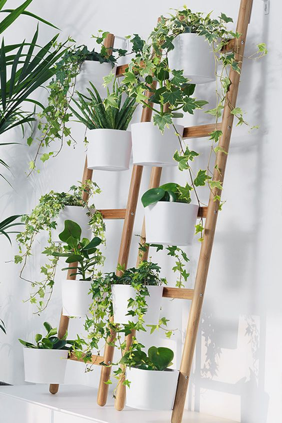 planters that clip onto the rungs of the ladders #gardenIdeas #garden #gardening #plants #homeDecor #indoor