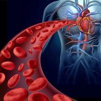 Blood Flow from Testomenix