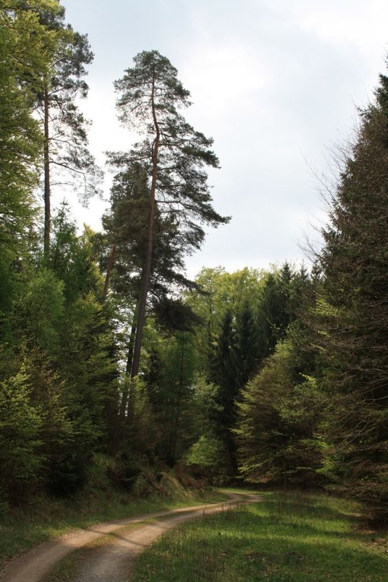 Wanderung in Ronshausen