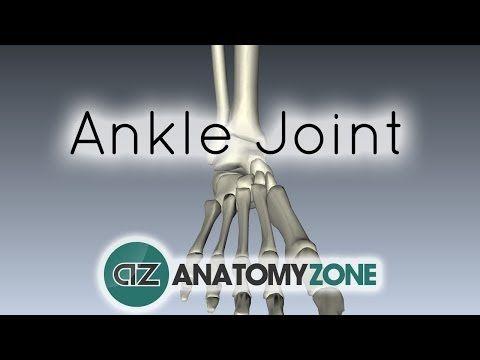 Anatomia pé  3