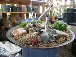 Bird-bath converted in pot  http://davesgarden.com/guides/articles/view/893/#