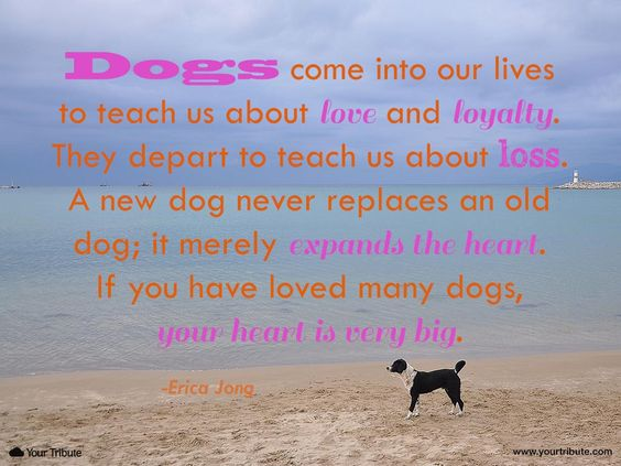 the passing of an unforgotten pet in our life Like adults, children more readily accepted their pet's death when it was  they  knew in advance that the animal would have a short life span.
