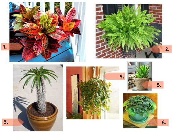 Here are essential tips you need to know to take good care of your indoor plants.