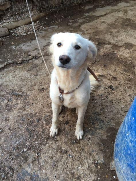 2017 12 28 Ghost 5 Tiere Suchen Ein Zuhause Hunde Susse Tiere