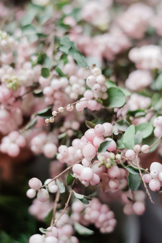 Pink snowberry is such a fun textural piece! Snowberry comes in white too, it's a great berry to any wedding flower design. Photo by Kristen Honeycutt