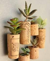 Plantas colgadas en tapones de corcho