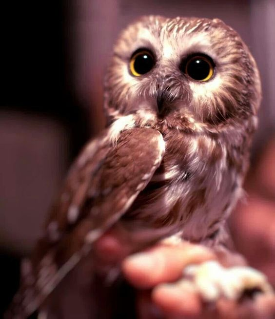 How cute is this owl!!!!!♥