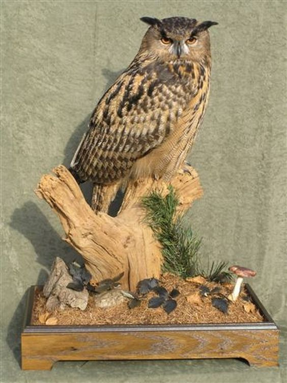 taxidermy home decor i like pinterest owl eagles poll taxidermy hot or not home decorating blog