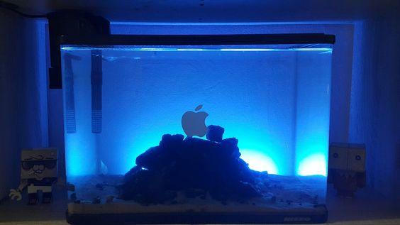 Tongok home made diy design wood aquarium aquascape by galih setiawan