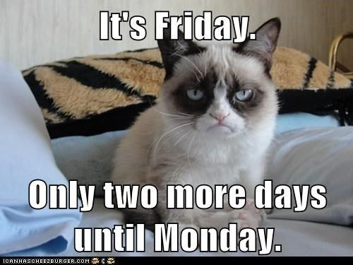 Happy Friday From Grumpy Cat! #cats #funny