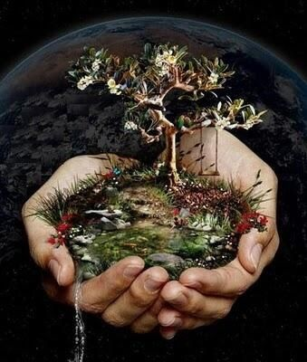 El mejor momento de plantar un árbol es ahora. @ecogranjero: