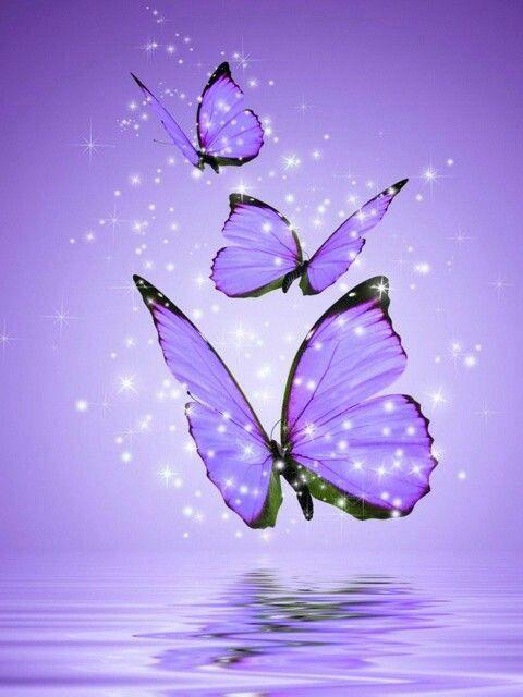 Pin By صورة و كلمة On لوني المفضل Purple Things Purple Butterfly Wallpaper Butterfly Wallpaper Backgrounds Butterfly Wallpaper