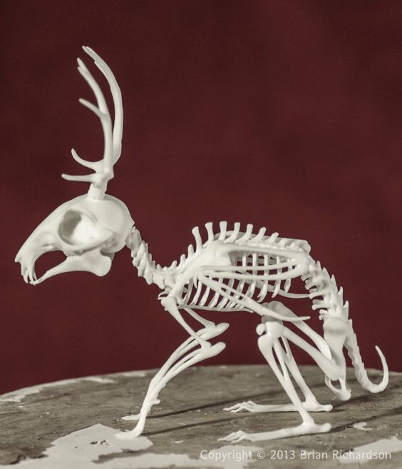 Wolpertinger Skeleton 3D Print by MythicArticulations on Etsy