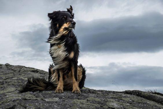 風に吹かれるおしゃれでかっこいい犬の壁紙