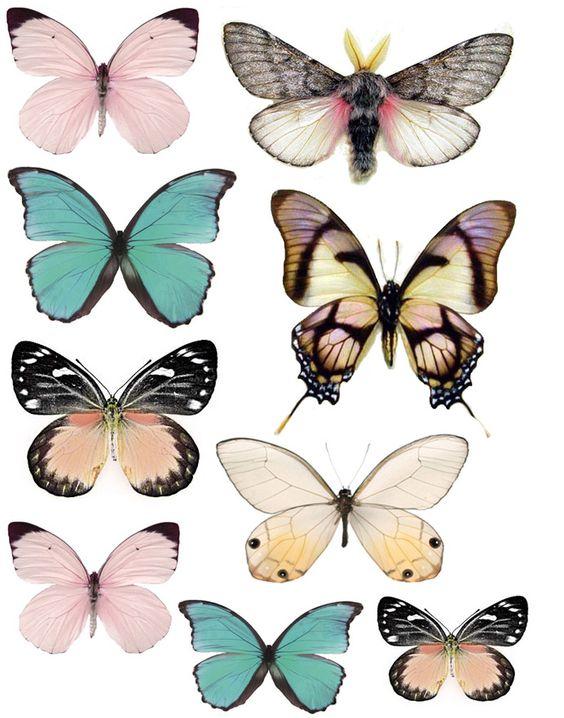 Butterflies stickers // pegatinas mariposas