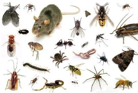 ان شركة صقر البشاير افضل شركة تقدم مكافحة حشرات بمكة حيث تتبع و تستخدم افضل السموم للقضاء على كافة الحشرات Ant Control Bed Bug Control Ants