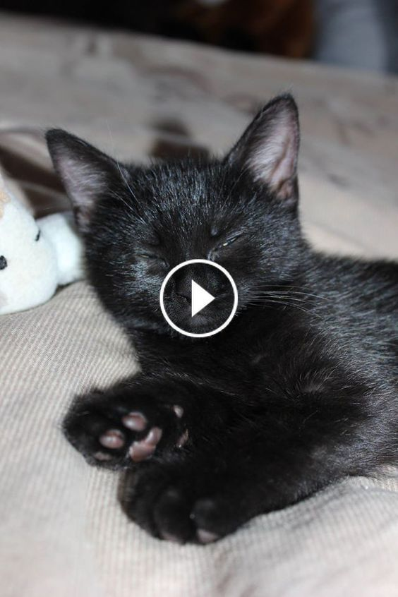 Video Funny Cats And Kittens Meowing Compilation C0k2rtsqh6