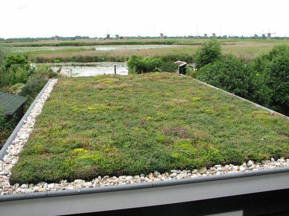 Kant en klaar groen Sedum dak, Hoe werkt het? Voor op de uitbouw